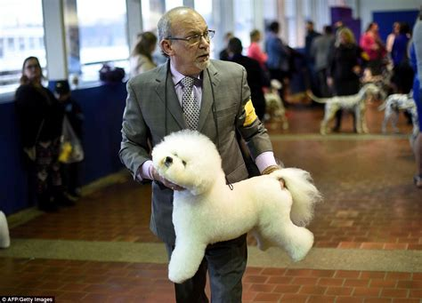 Westminster Kennel Club show kicks off as 2,700 dogs get