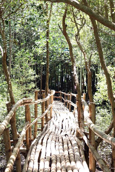 Blessing of Tomongtong Mangrove Eco - Trail | Municipality