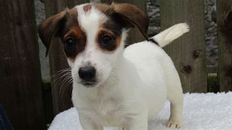 ISPCA looking for homes for 28 dogs in Longford - Shannonside